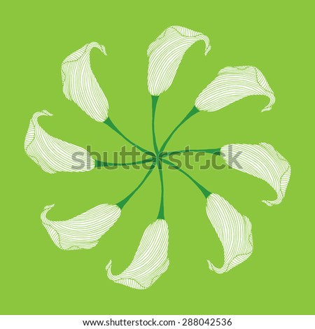 Calla flower illustration - stock vector