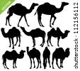 Camels silhouettes vector - stock vector