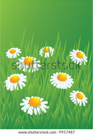 Camomiles in the grass. Vector. - stock vector