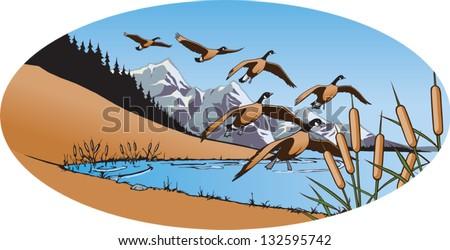 Canada Geese 2 - stock vector