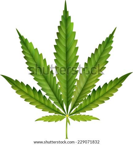 Cannabis leaf  - stock vector