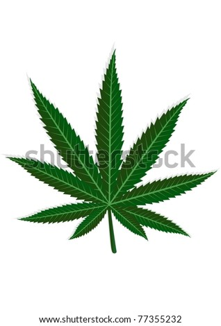 Cannabis leaf. On a white background depicts a green leaf of hemp.