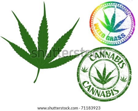 Cannabis leaf vector isolated on white background and cannabis grunge stamps - stock vector