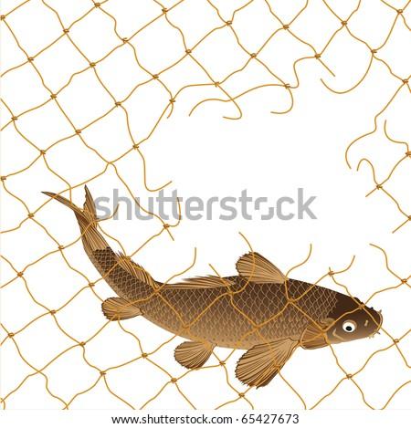 carp and nets - stock vector