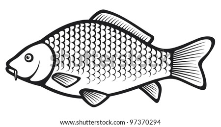 Carp fish (Common carp) - stock vector