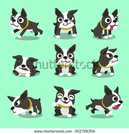 Cartoon character boston terrier dog poses - stock vector