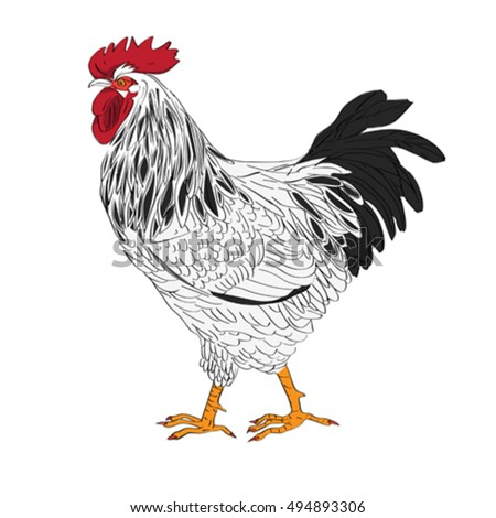 Cartoon illustration of a rooster isolated on white