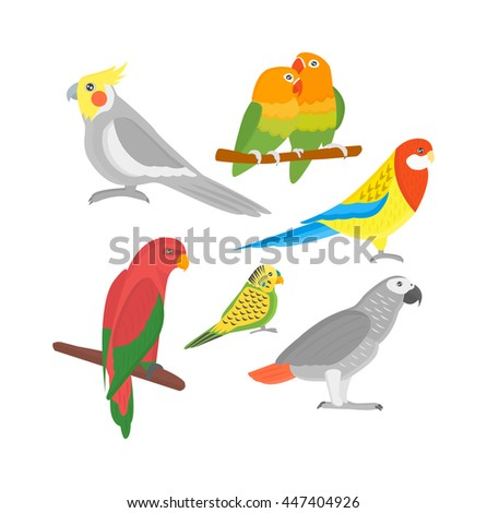 Cartoon parrots birds and parrots wild animal birds. Tropical parrots feather zoo birds tropical fauna macaw flying ara. Various cartoon exotic birds set with parrots illustration vector - stock vector