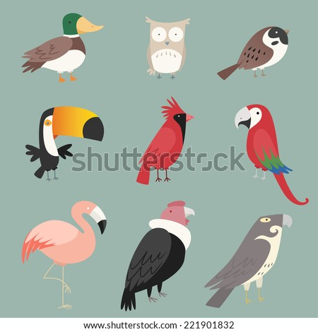 Cartoon species Bird collection. With nine (9) different birds species like: duck, owl, peacock, rooster, pelican, toucan and swan vector illustration birds.  - stock vector