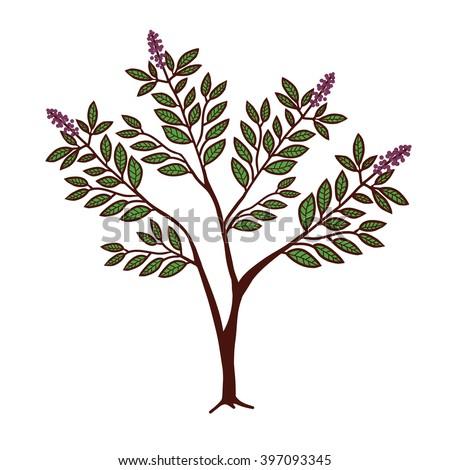 allopurinol or colchicine
