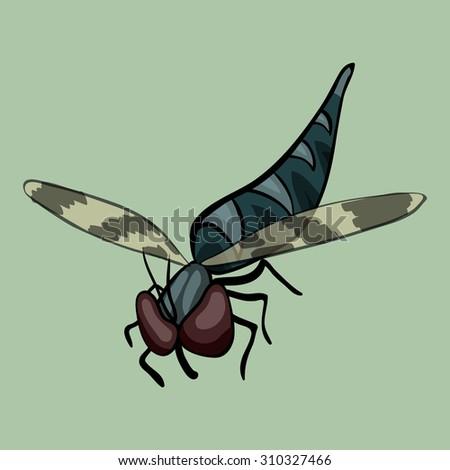 cartoon vector robber fly - stock vector