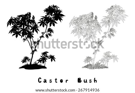Castor Plant with Leaves, Fruits and Grass Black Contours, Silhouette and Inscriptions Isolated on White Background. Vector - stock vector
