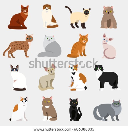 animal pet