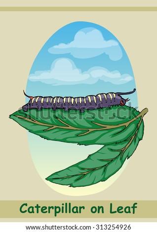 caterpillar walking on the leaf hand draw illustration - stock vector
