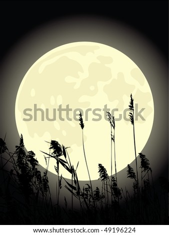 Cattail under the moon. Beautiful vector illustration. - stock vector