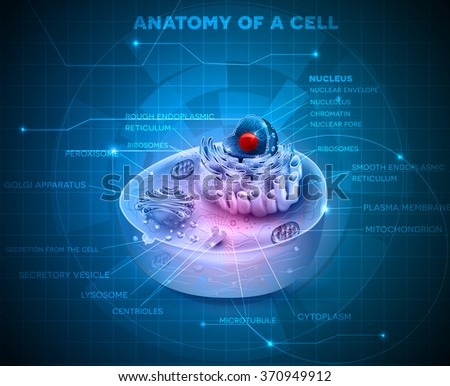 Cell anatomy cross section on an abstract blue technology background - stock vector