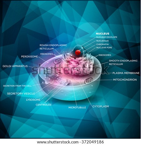 Cell cross section structure beautiful abstract design on a blue triangle shapes background. - stock vector