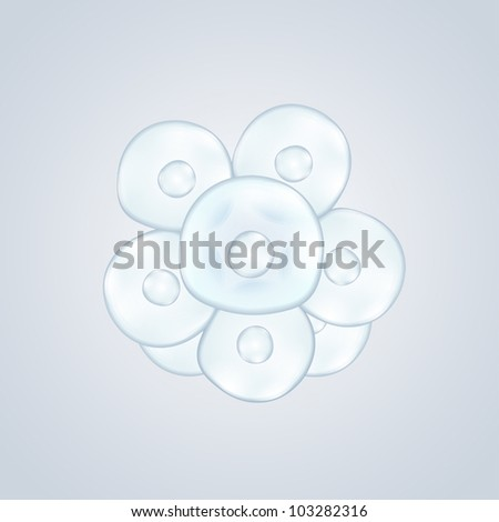 cell division - stock vector
