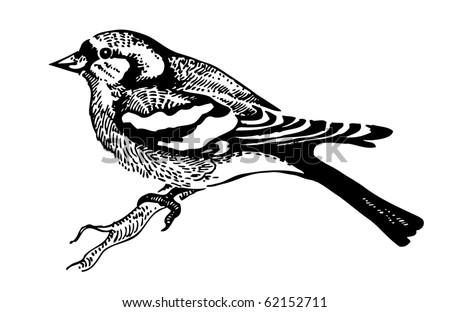 Chaffinch bird, hand-drawn illustration - stock vector