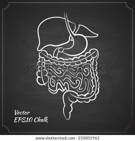 chalk painted alimentary system vector illustration - stock vector