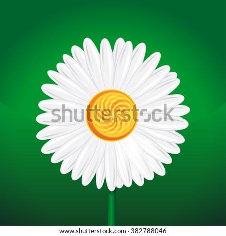 Chamomile, camomile, daisy wheel, daisy chain, chamomel. Daisy flower close-up. White daisy on a green background. Vector illustration. Chamomile flower isolated on green background. - stock vector