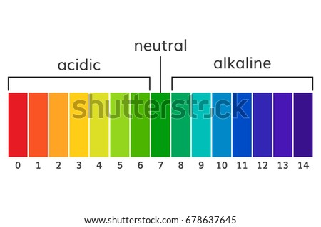 Chart Ph Alkaline Acidic Scale Vector Stock Vector