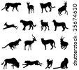 Cheetah and its prey - stock vector