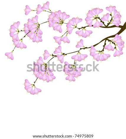 cherry blossom in spring  on a white background - stock vector