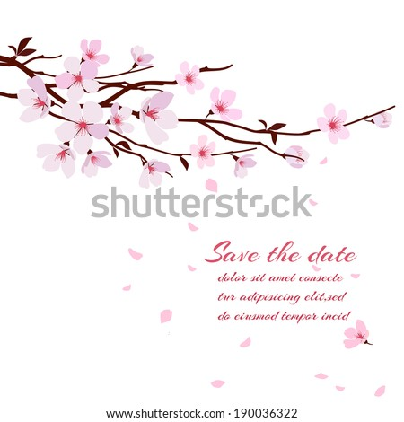 Cherry blossom, sakura branch with pink flowers. Greeting card vector template - stock vector