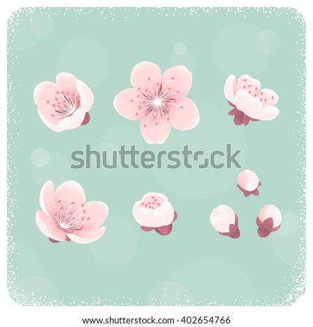 Cherry blossom, spring flowers set. Retro vector illustration