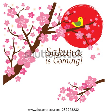 Cherry Blossoms or Sakura flowers with Bird on the Branch