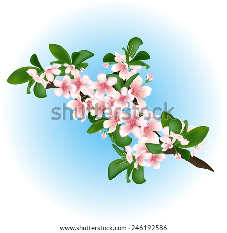 Cherry branch with flowers and leaves. Vector illustration - stock vector