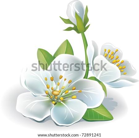 Cherry flower - stock vector