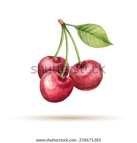 Cherry  hand drawn watercolor, on a white background. Vector illustration. - stock vector