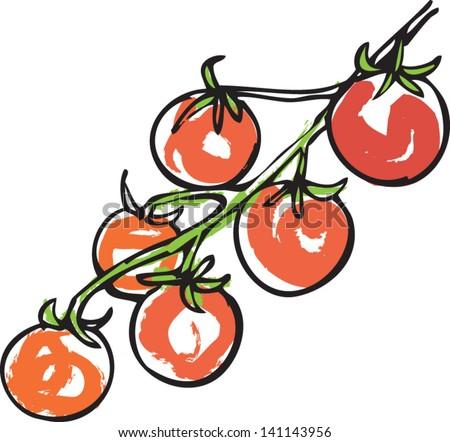 cherry tom - stock vector