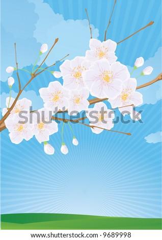 Chery flowers. Vector. - stock vector