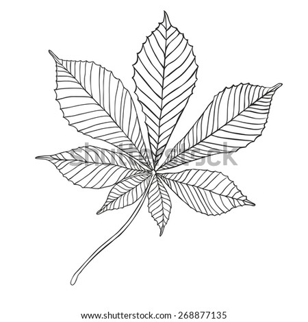 chestnut tree leaf coloring pages - photo#13