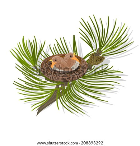 Chickadee birds in the nest on a pine branch vector illustration  - stock vector