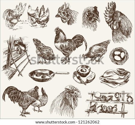 chicken breeding - stock vector