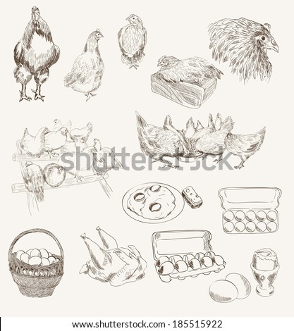 chicken breeding. set of vector sketches on a gray background - stock vector
