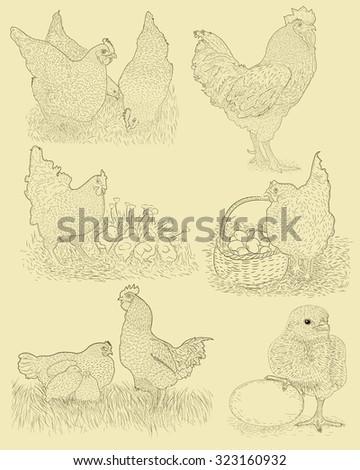 Chicken farm set. Hand drawn illustration in vintage style - stock vector