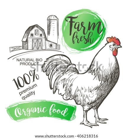Chicken, hen, rooster, cock, cockerel and farm. Vector illustration in vintage style. - stock vector