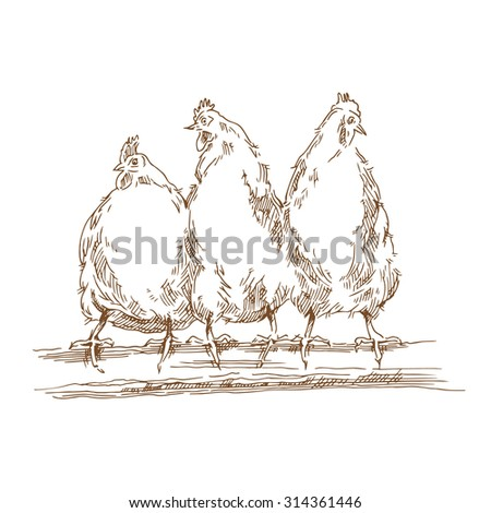 Chicken sketch. Vector illustration isolated on white background. - stock vector