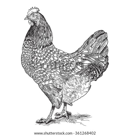 Hen Egg Stock Images, Royalty-Free Images & Vectors ...