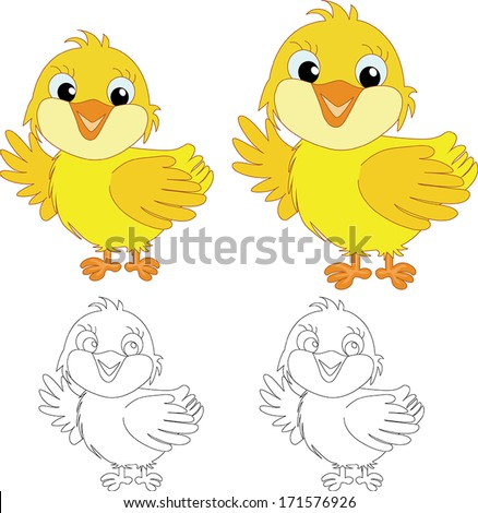 chicks on the white background - stock vector