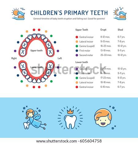 baby teeth schedule