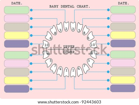 Children Teeth Anatomy Mothers Stock Vector 92443603 Shutterstock