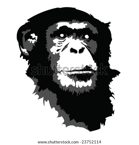 chimp vector - stock vector