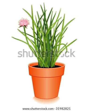 Chives in clay flowerpot. Popular cooking herb, pink flowers, slender leaves, mild onion flavor for seasoning, garnish, French herb blend Fines Herbes. See more spices in this series. EPS8 compatible.