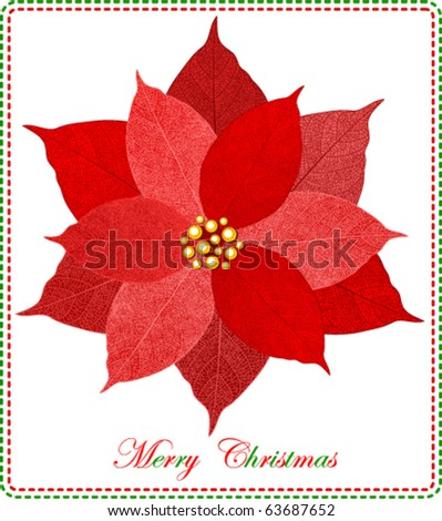 Christmas card with beautiful red poinsettia - stock vector